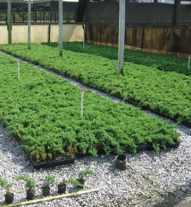 Wholesale Only Plant Pictures